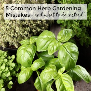 5 Common Herb Gardening Mistakes and what to do instead!