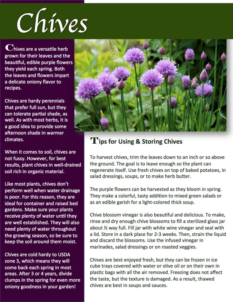 Herb Gardening 101: Growing Chives