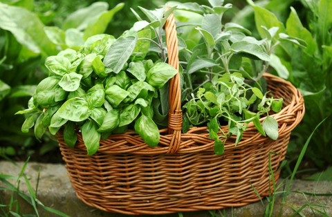 DIY Containers for Herb Gardens - baskets make great containers for growing herbs.