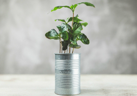 DIY Containers for Growing Herbs