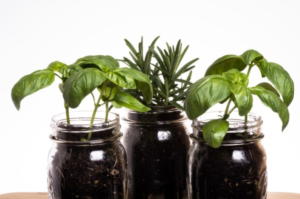 DIY Herb Containers - Mason jars make cute and inexpensive herb containers for your kitchen windowsill.