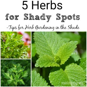 5 Herbs for Shady Spots - Tips for Herb Gardening in the Shade. #herbgarden #gardeningtips