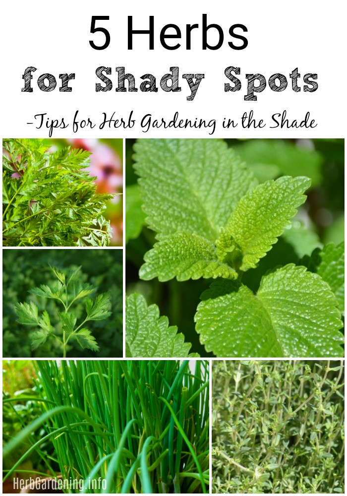 Tips for Herb Gardening in the Shade