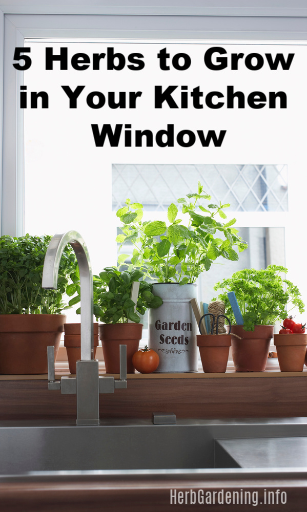 5 Herbs to Grow in Your Kitchen Window. #herbs