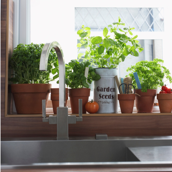 5 Herbs to Grow in Your Kitchen Window