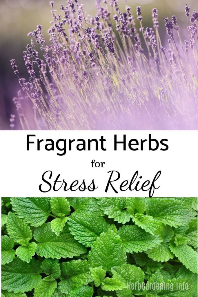 Just like certain colors can relieve stress, fragrances can also do the same. This is one of the reasons why aromatherapy is so popular. Certain scents in nature are known to instantly boost your mood, calm anxieties and make you feel at peace. It's easy to grow some of your own stress relieving plants right in your own garden, with fragrant herbs featuring aromas like lavender, lemon and basil.