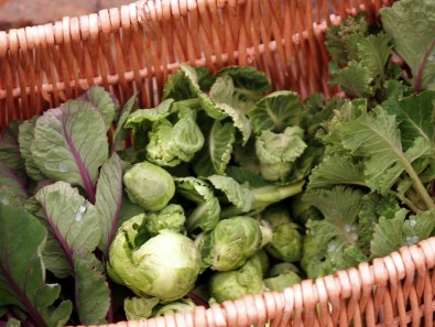 A basket of colourful sprout tops