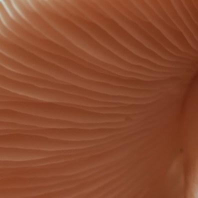 fungi-texture-1