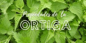 Lee más sobre el artículo Para que sirve la Ortiga: Beneficios y propiedades