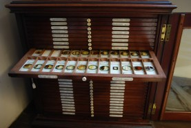 Moss microscope slides