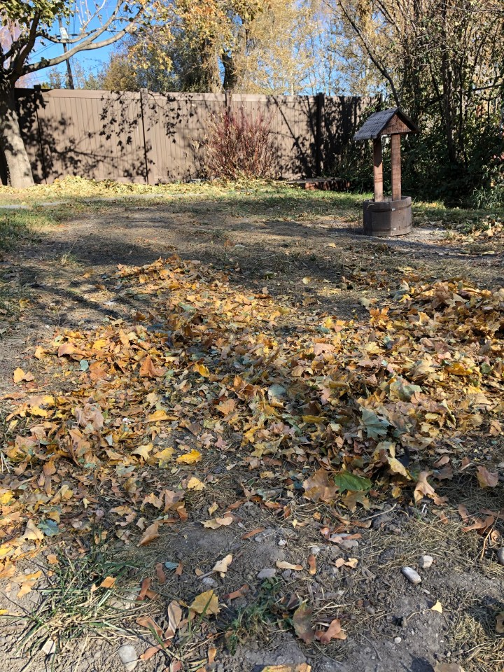 One of our garden areas, first batch of leaves dispersed.