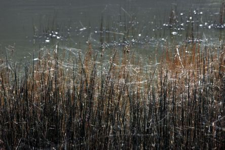 Horizontal webs in vegetation
