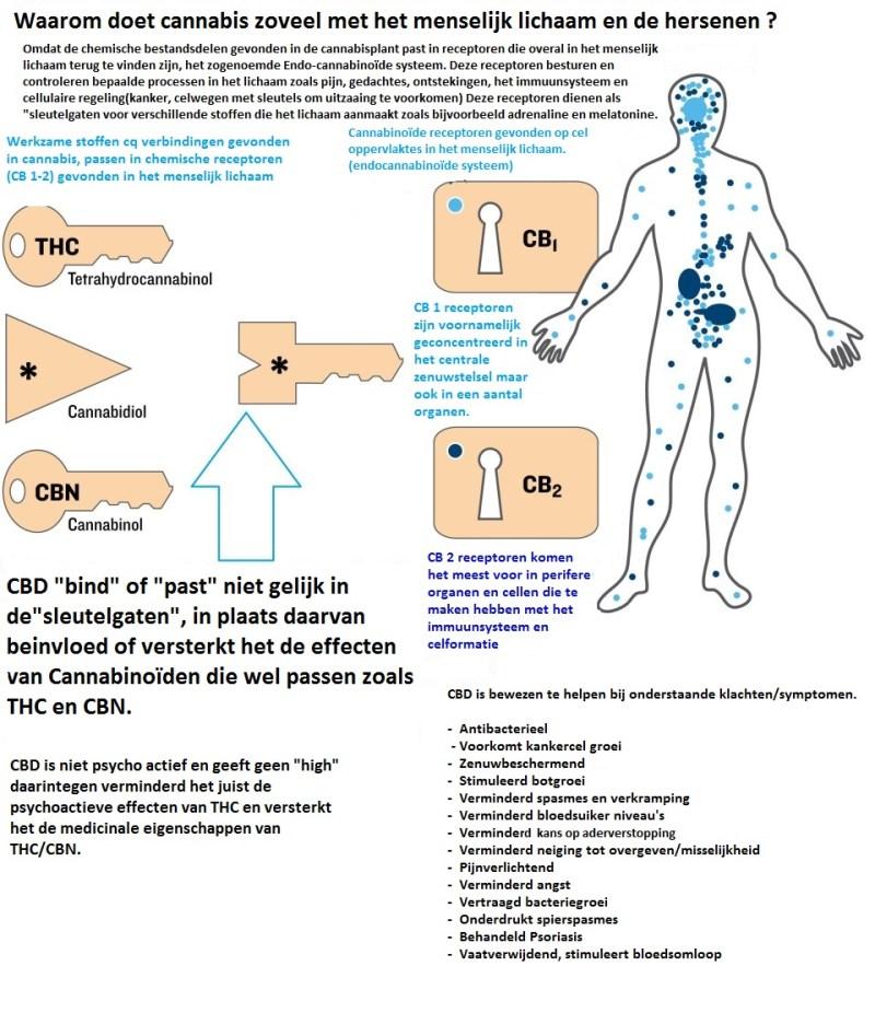 Cannabinoïden en het lichaam