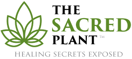 The Sacred Plant