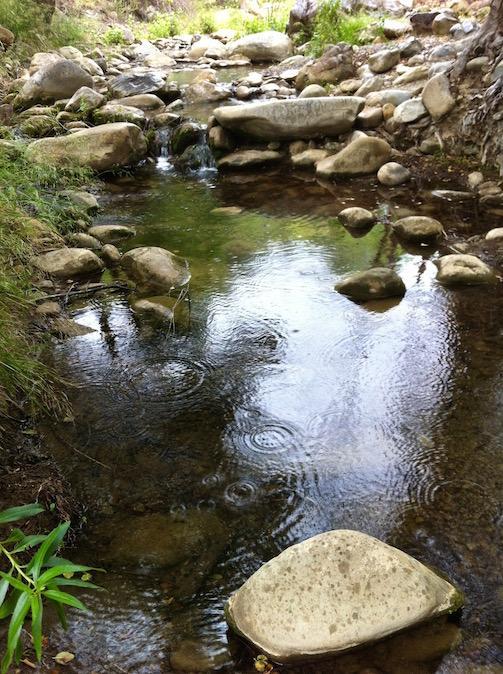 Raindrops in Matilija Creek