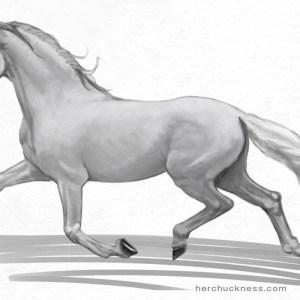 horse anatomy - surface