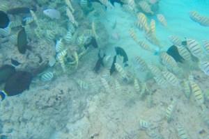 【夏威夷游记】小小姑娘清早起床,传说中的恐龙湾浮潜去 .::真的值得吗? ::.