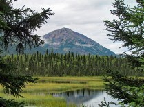 beaver-pond-on-tanalian-trail