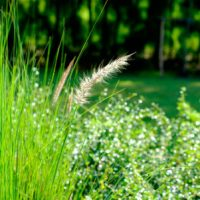 Trade In Your Lawn For A Low-Maintenance Meadow Garden