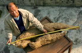 King sized kudzu root/bigwhiteguy.com