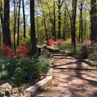 Getting to Know the U.S. National Arboretum