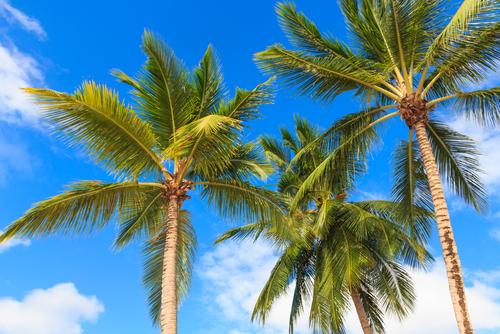 Palm Beach/Shutterstock