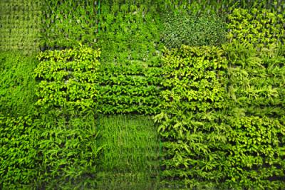 Green wall: Adisa/Shutterstock.com