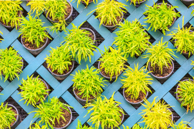 Vertical garden composed of small trees in pots: Tooykrub/Shutterstock.com