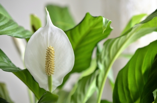 Clear the Air With These 10 No-Fuss Houseplants