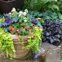 Flowering Kale: The Coolest, Cool-Season Ornamental