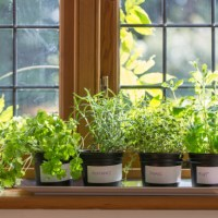 How To Grow Herbs Indoors All Year Round