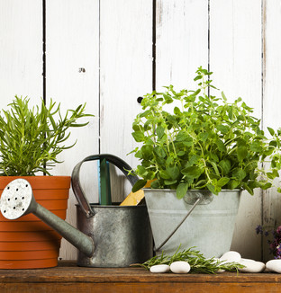 herbs.watering can 2