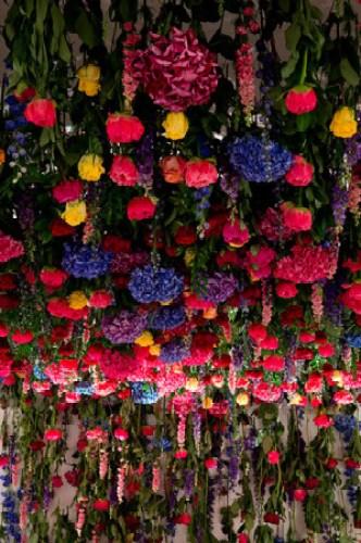 Flowers_July_015