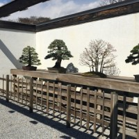 Miniature Mastery At The National Bonsai & Penjing Museum