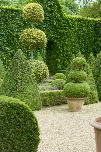 Formal English garden with boxwood topiary