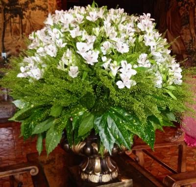 Chen. asparagus fern (1)