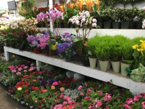 New York City's flower district