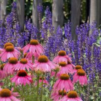 How To Add 'Hot' Colors To Your Summer Garden