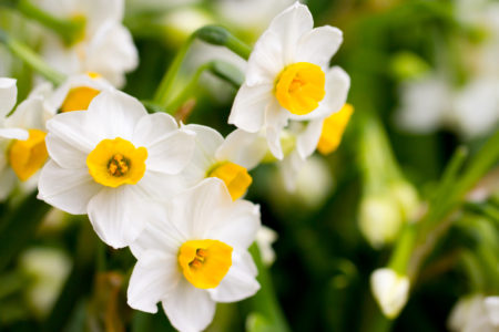 What To Do If Your Spring Bulbs Come Up Too Early