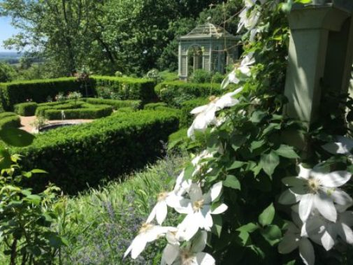 Clematis blooming the Rose Garden at Mount Sharon/Photo: Here By Design