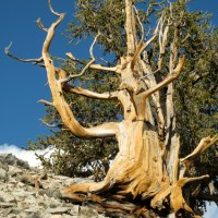 Life On the Edge: The High Altitude Plants of the Grand Canyon