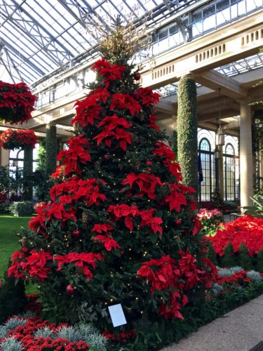 Main Conservatory poinsettia tree/A Longwood Christmas