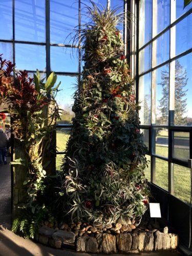 Tillandsia Tree/A Longwood Christmas