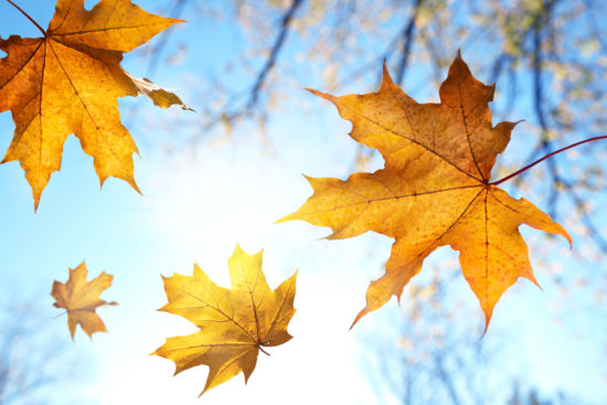 Fall Is Back: It's Time To Get Out And Smell The Leaves