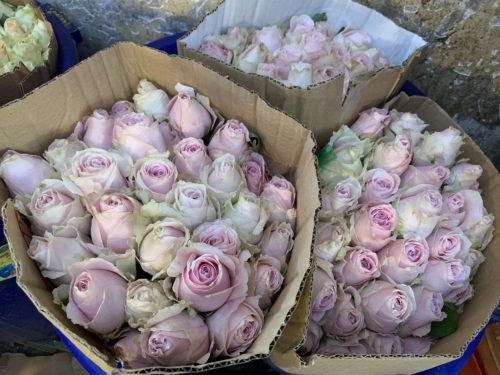 Roses for sale at Saigon's largest flower market