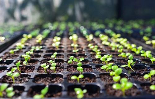 growing seeds