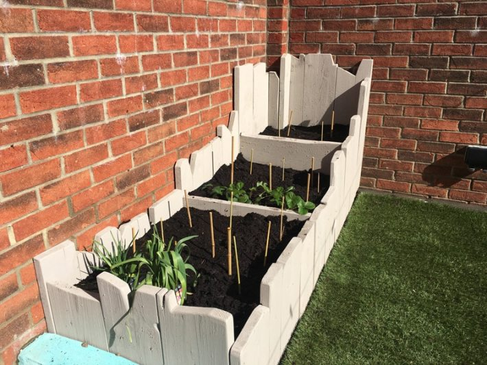 Home Grown vegetable patch