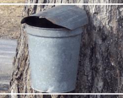 Sap bucket on maple tree