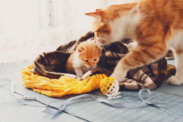 How Often Should A Cat Poop