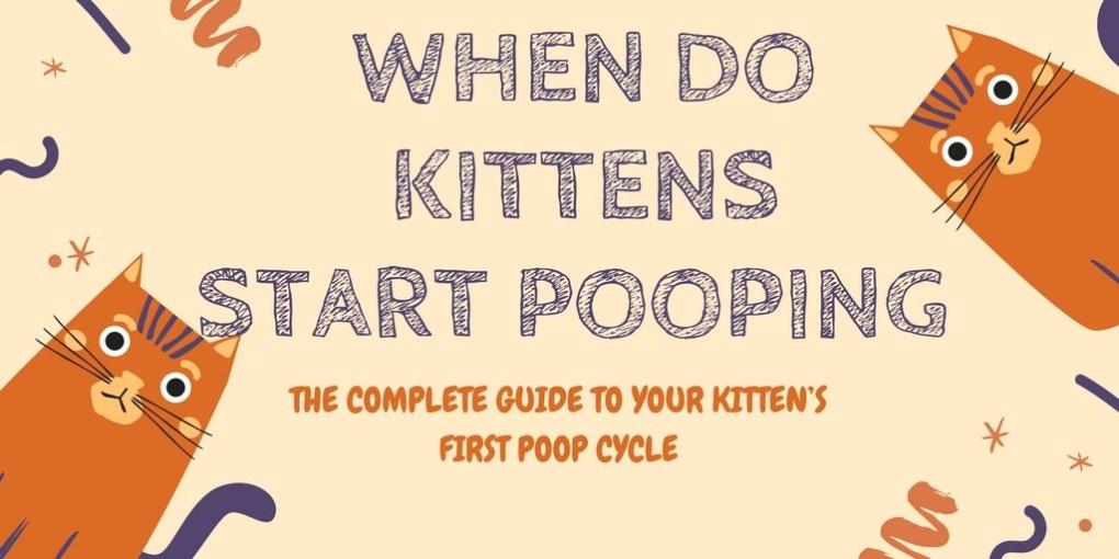 When Do Kittens Start Pooping
